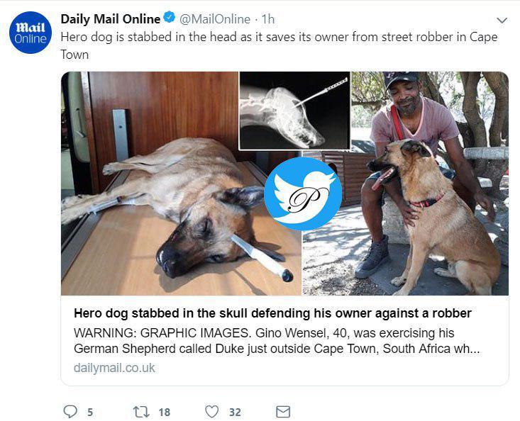 سگ قهرمانی که برای نجات صاحبش در برابر سارق ایستاد+عکس