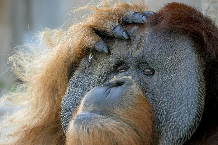 رفتارهای انسانی در حیوانات؛ از خندیدن به جوک های بی مزه تا اجیر کردن قاتل [قسمت دوم]