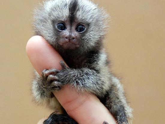 کوچکترین حیوانات دنیا؛ از کوسههای یک وجبی تا خفاشهای بند انگشتی