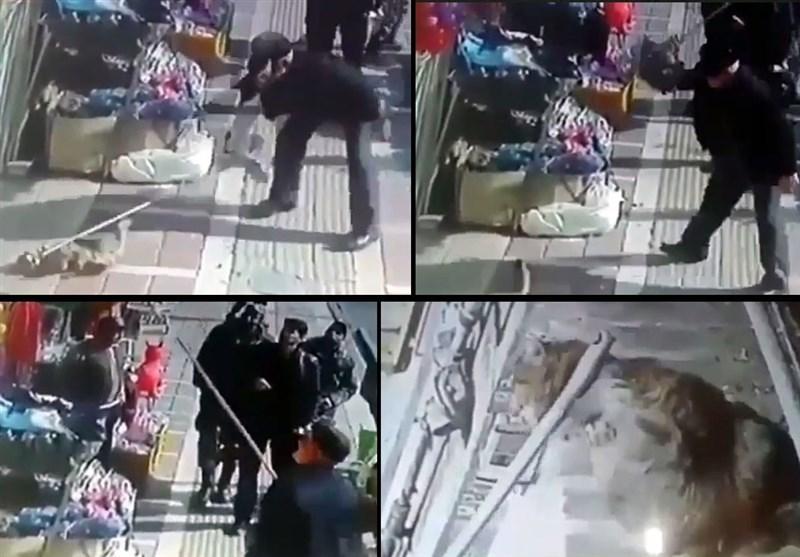 معرفی یک حیوانآزار در تهران به مرجع قضایی +عکس