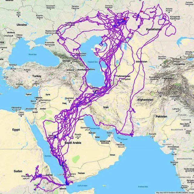 مسیر حرکت ۲۰ ساله یک عقاب از ایران تا عربستان +عکس