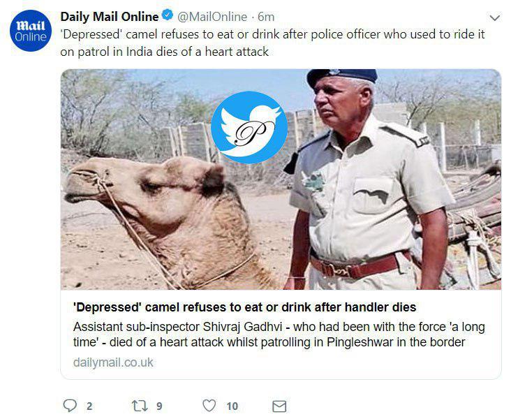 ناراحتی عجیب یک شتر بخاطر صاحب مرده اش +عکس