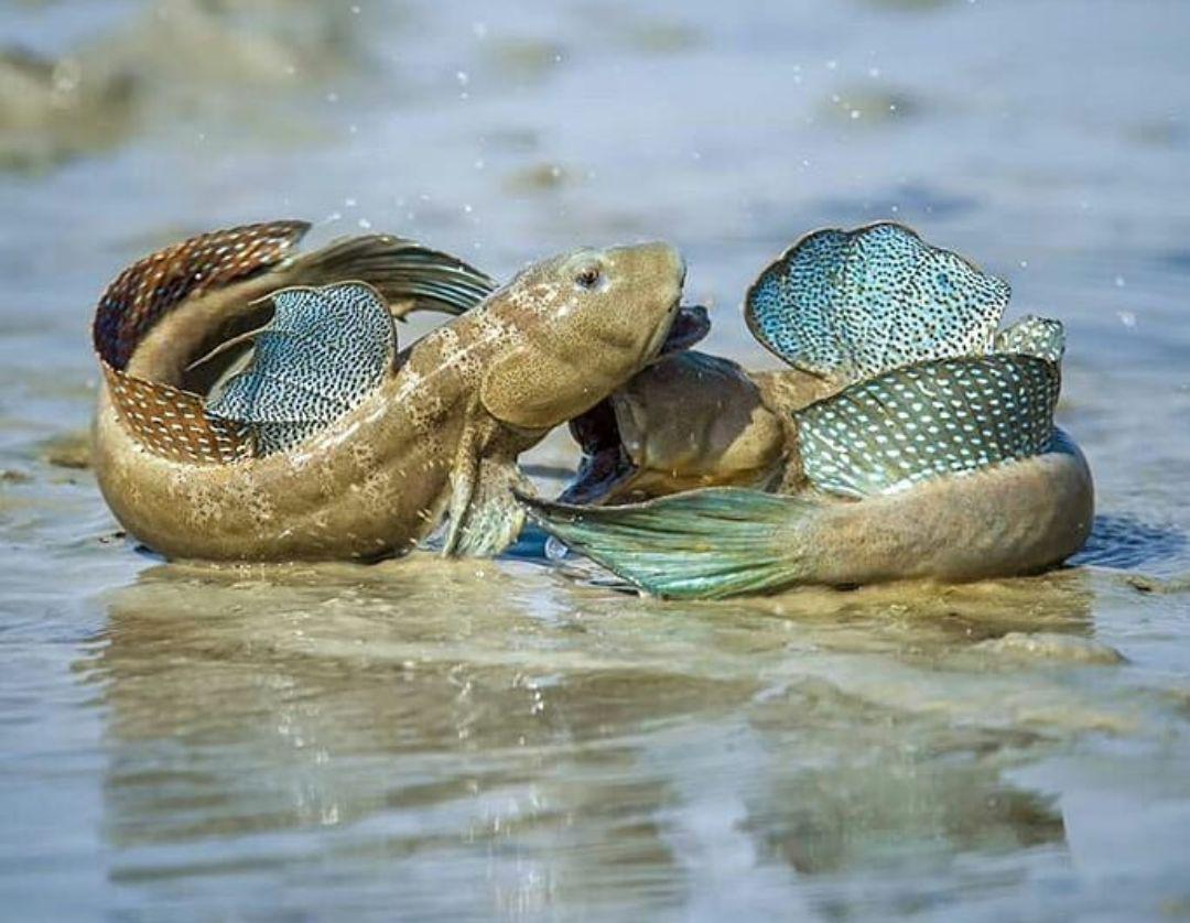 نمایی زیبا از نبرد گلخورکها در خلیج فارس