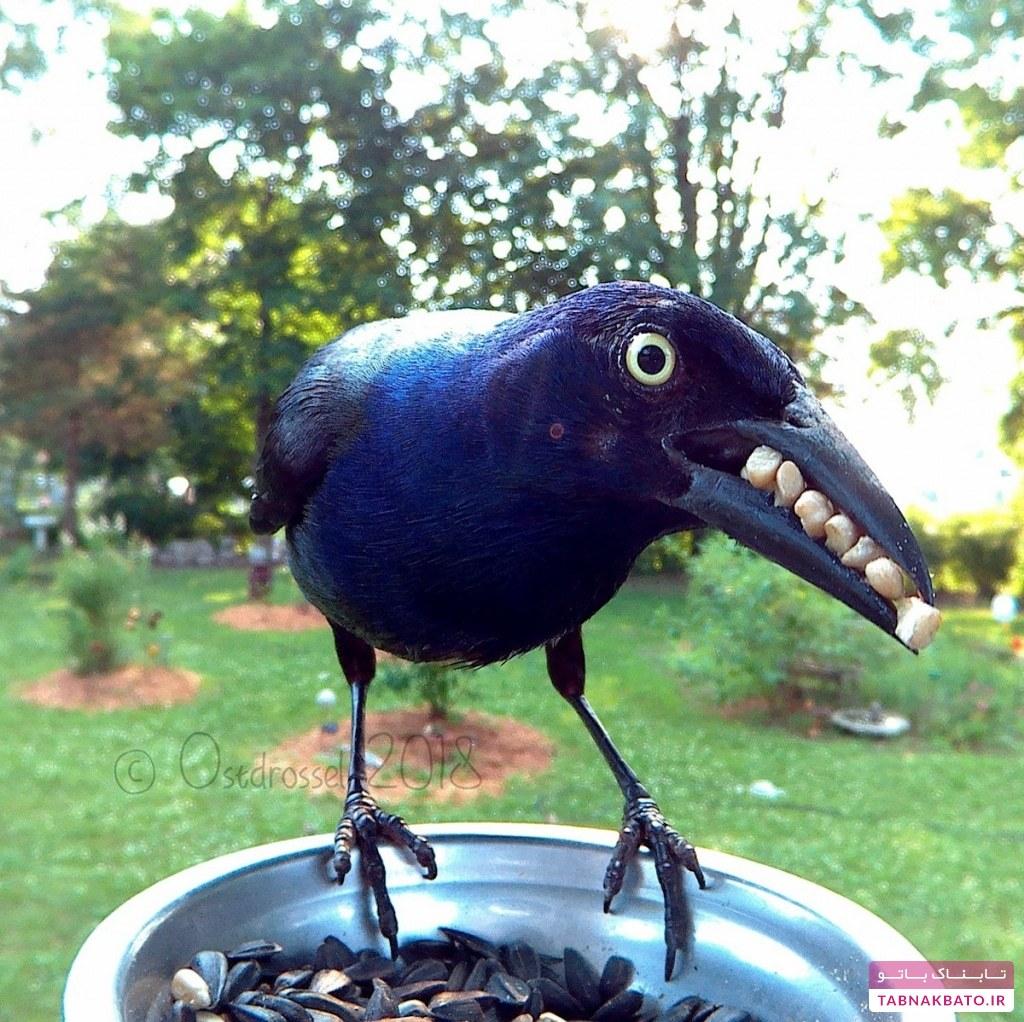 کلوزآپهایی زیبا از پرندگان ـ 2