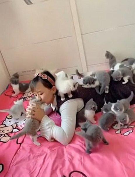 زن جوان چینی دهها بچه گربه را به فرزندی قبول کرد+تصاویر