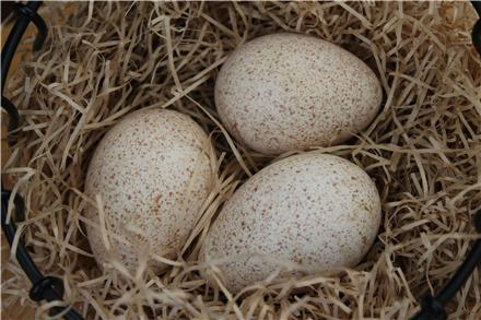 خواص شگفت انگیز تخم پرندگان