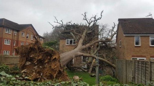 سقوط عجیب درخت بر سقف خانهای در انگلیس +تصاویر