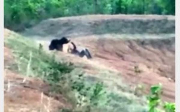 سلفی مرگبار با خرس وحشی