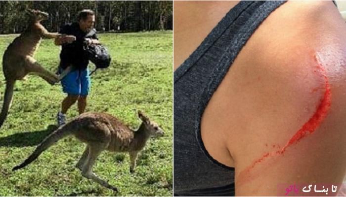 دلیل عجیب کانگوروها برای حمله به گردشگران