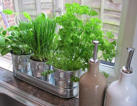 گیاهان مخصوص آشپزخانه