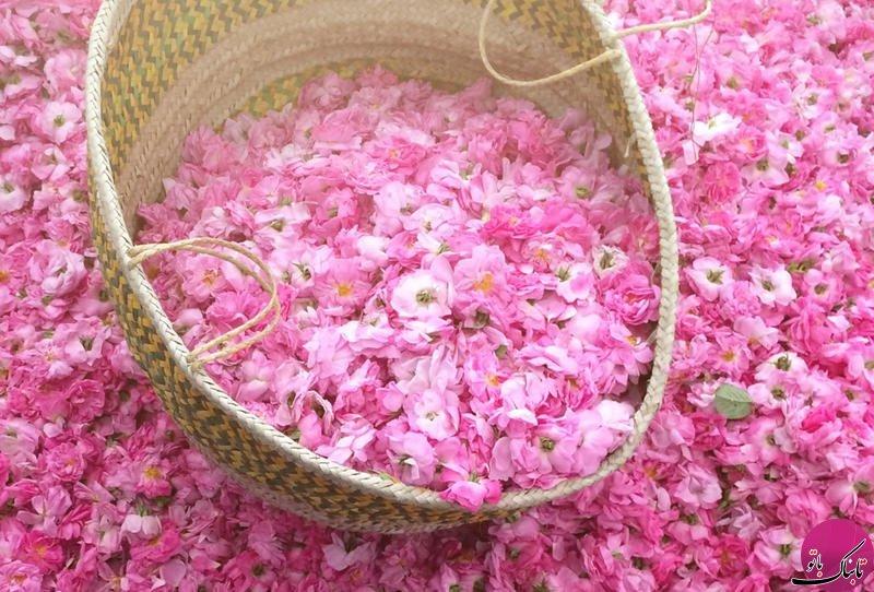 جشنواره ی گل در طائف عربستان
