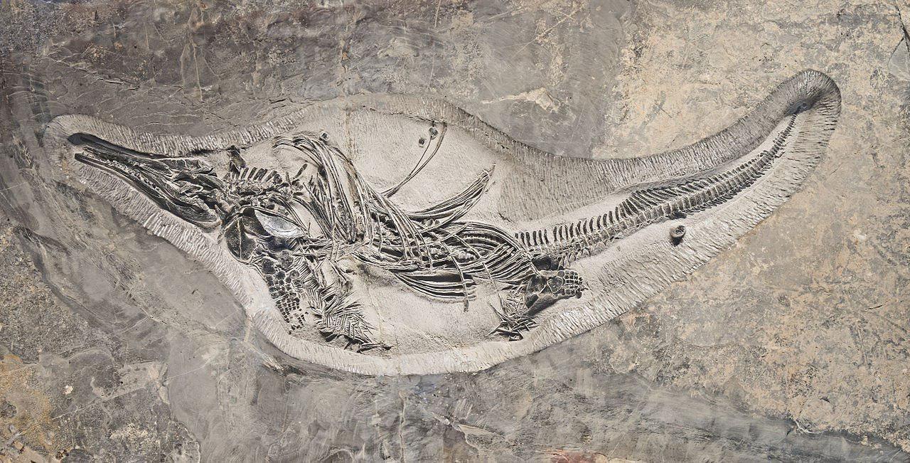 کشف فسیل ماهی خزنده ۱۲۰ میلیون ساله+عکس