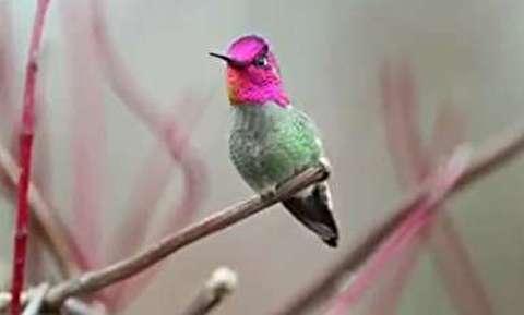 پرنده خارق العاده ای که 62 رنگ عوض می کند