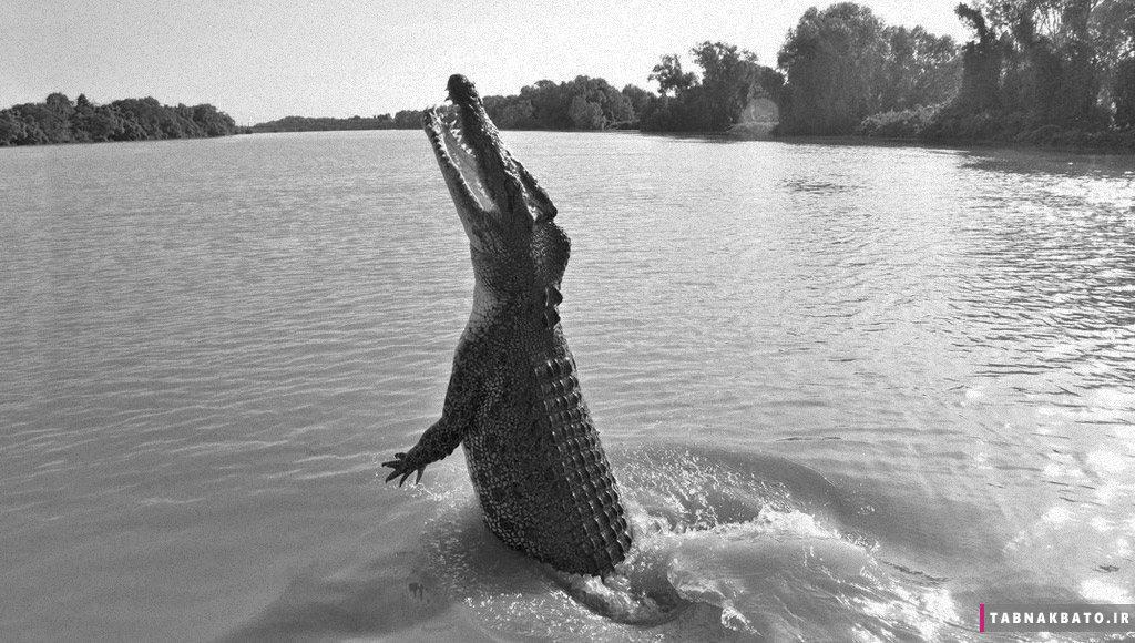بدترین فاجعه رخ داده توسط کروکودیلها در جهان