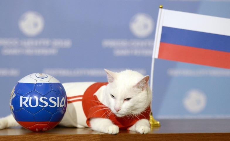 گربه پیشگو اولین بازی جام جهانی را پیشبینی کرد +عکس