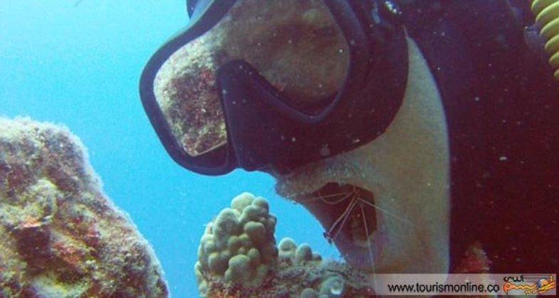 پاکسازی دهان یک غواص با میگو زنده +تصاویر
