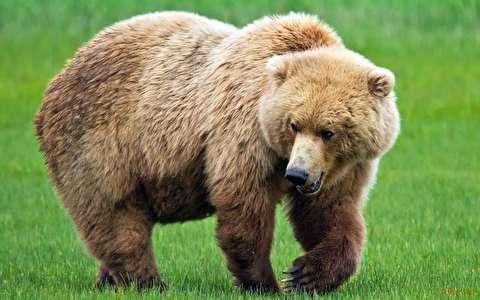 حمله ناگهانی خرس به یک مرد در سیرک