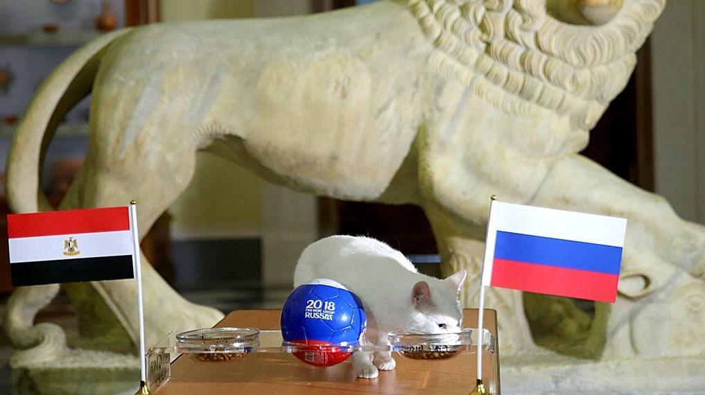 گربه پیشگو چه تیمی را برنده نبرد روسیه و مصر اعلام کرد؟ +عکس