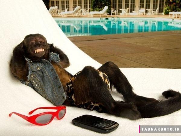 آنجلینا جولی میمون ها و زندگی شگفت انگیزش!
