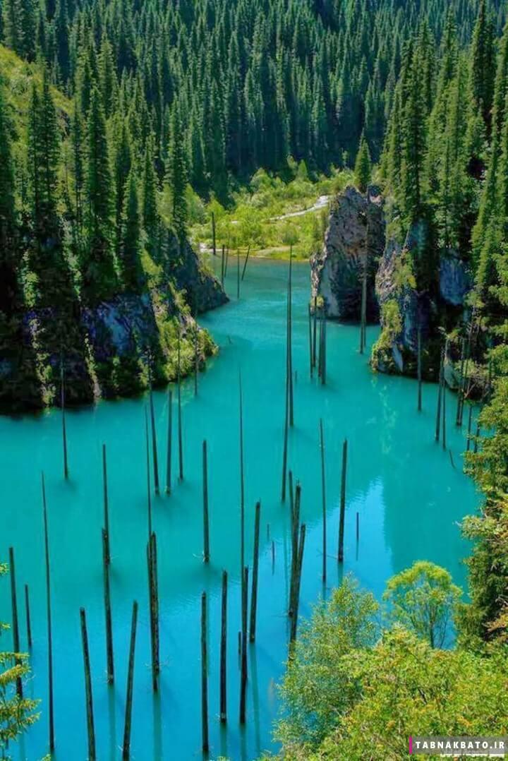 دریاچه کایندی؛ جنگل زیر آب