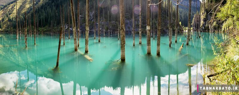 عجیب ترین دریاچه جهان؛ جنگل زیر آب
