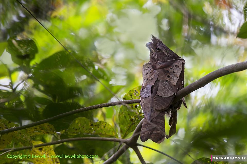 عکس هایی از یک پرنده عجیب و زیبا