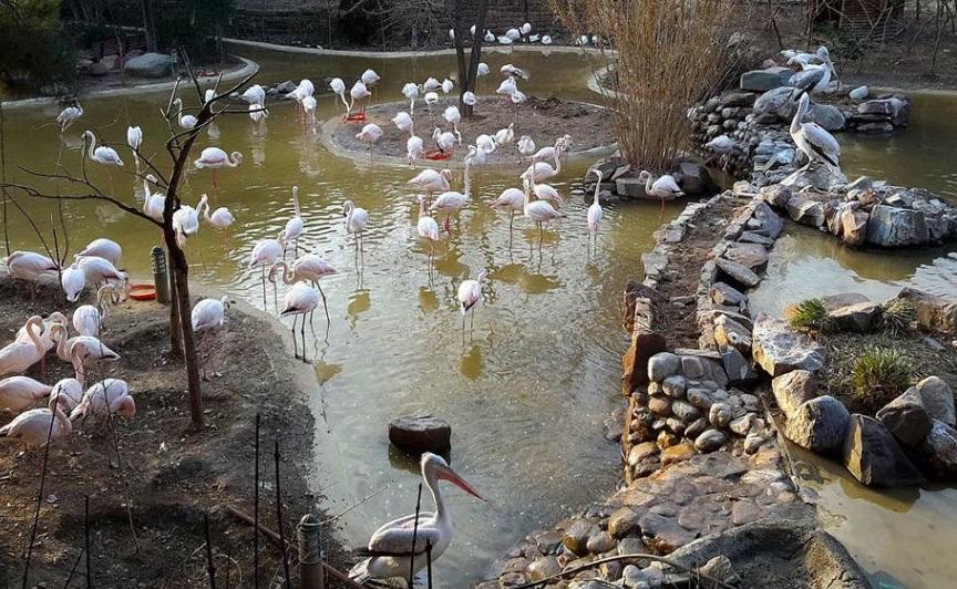 گردش در بزرگ ترین باغ پرندگان ایران