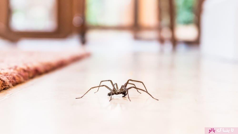 مزیت های وجود عنکبوت در خانه!