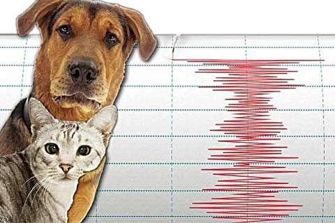 واکنش حیوانات هنگام وقوع زلزله ۶.۱ ریشتری ژاپن