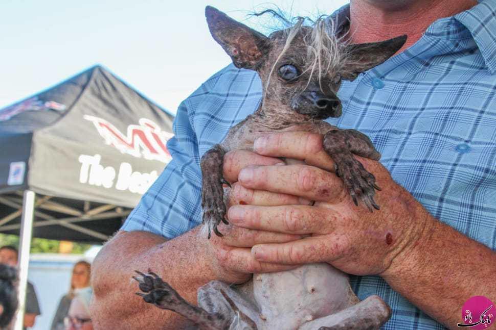 مسابقه انتخاب زشتترین سگ جهان