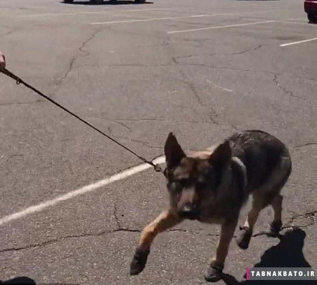 کفش پوشیدن سگ پلیس در آمریکا