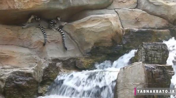 جلوگیری از آفتاب زدگی حیوانات در باغ وحش پکن
