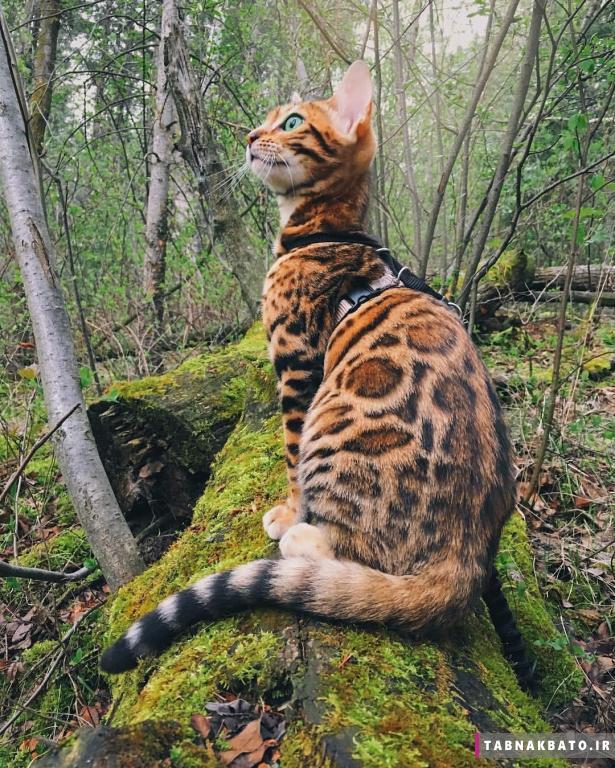 معروف ترين گربه هاي اينستاگرام
