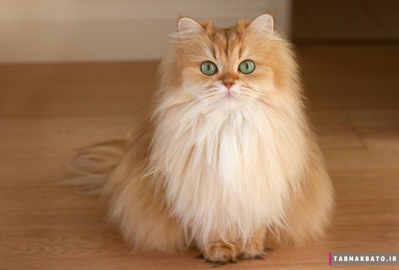 معروف ترین گربه های اینستاگرام