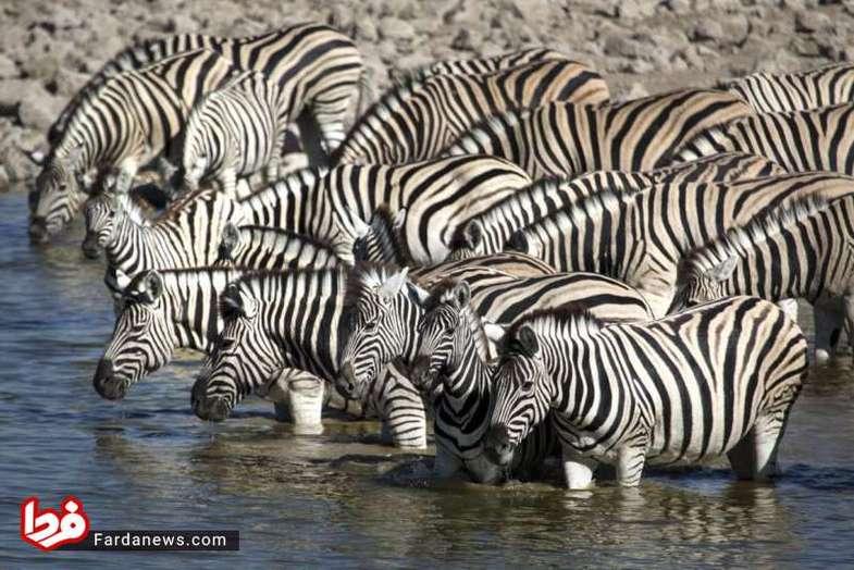 تصاویر دیدنی از مهاجرت حیوانات در جهان