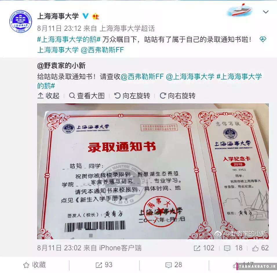 پذیرش یک غاز در دانشگاه شانگهای چین