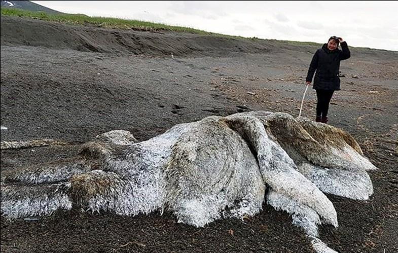 سوغات شگفتآور اقیانوس برای ساحل روسیه +تصاویر