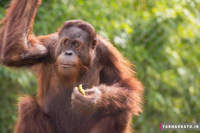 حیواناتی که می توانند حرف بزنند