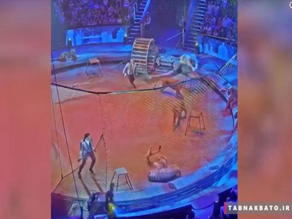 بسته خبری: رومئو و ژولیت در قزاقستان/ رفتار زشت مسافر در مترو نیویورک/ جایزه قاچاقچیان کلمبیایی برای کشتن یک سگ/ نهنگ در سواحل کالیفرنیا/ نبرد ببر سیبری و شیر در سیرک روسیه