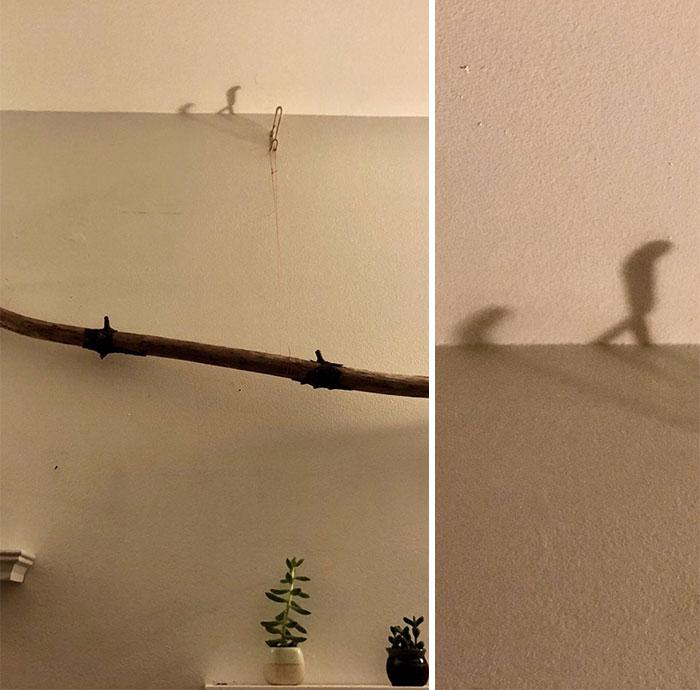 تصاویری از سایههای شگفتانگیز: وقتی سایهها هم حرفهای تازه یا متفاوتی دارند!