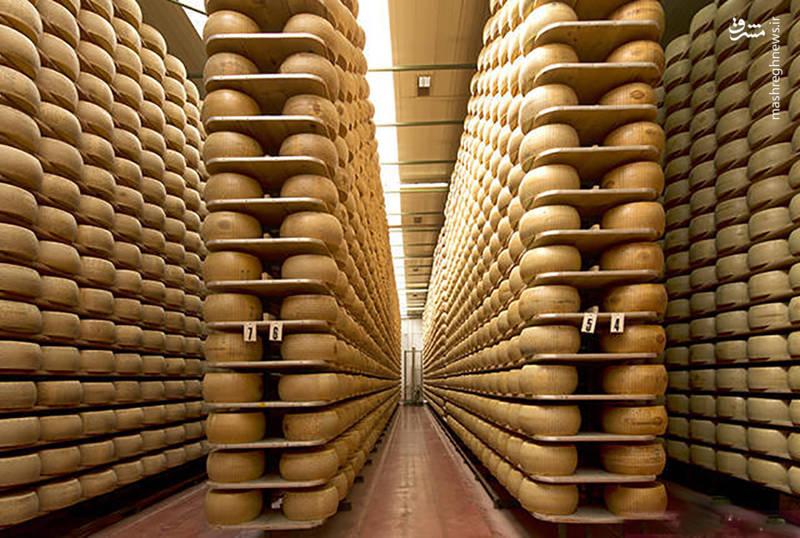 وقتی «پنیر» وثیقه بانکی میشود+عکس