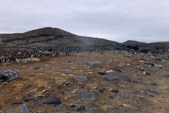 کشف گور دستهجمعی پنگوئنهای مومیاییشده +عکس