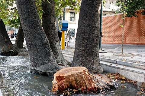 پشت پرده درختان جاسوس شهر تهران
