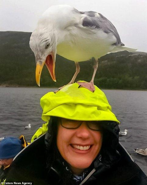 حمله مرغان دریایی برای نوشیدن چای کاپیتان +تصاویر