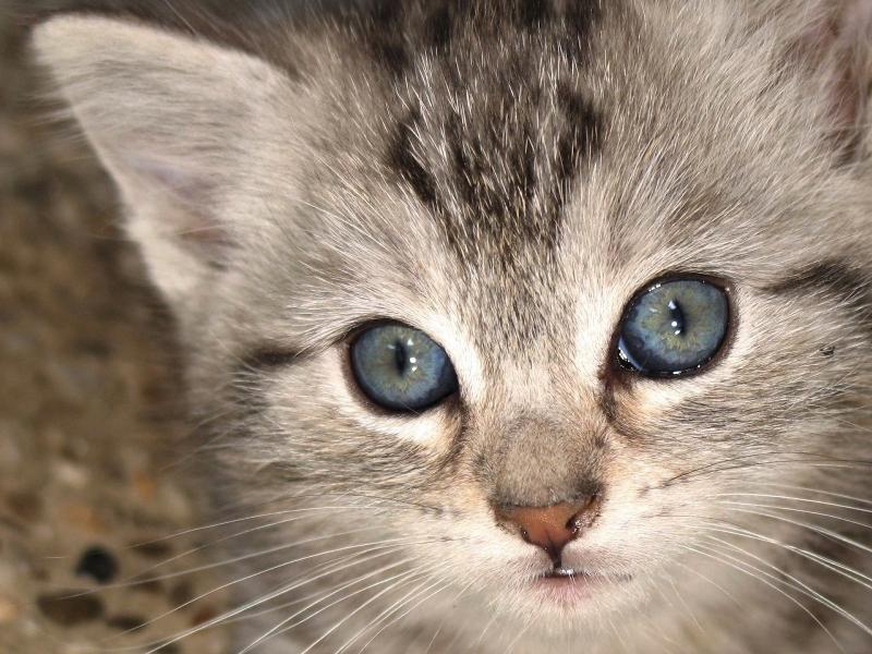بلایی که گربه سرتان می آورد