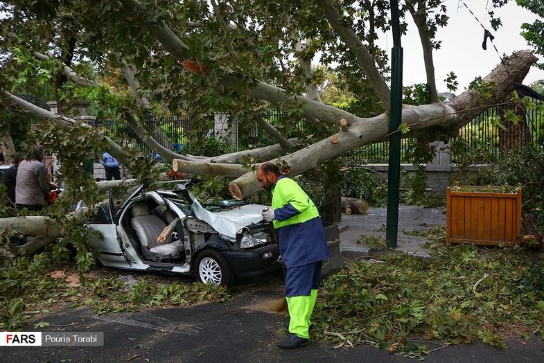 سقوط درخت در اثر طوفان در تهران +عکس