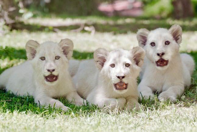 با ۱۰ مورد از گران قیمتترین حیوانات دنیا آشنا شوید