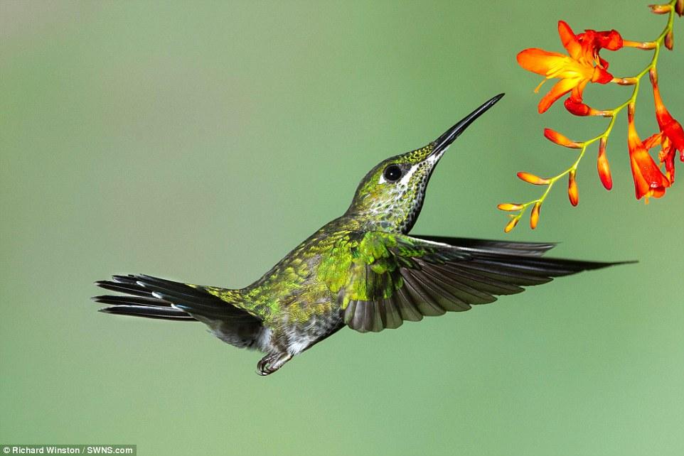تصاویری زیبا از دنیای پرندگان در جریان یک مسابقه بینالمللی حیات وحش
