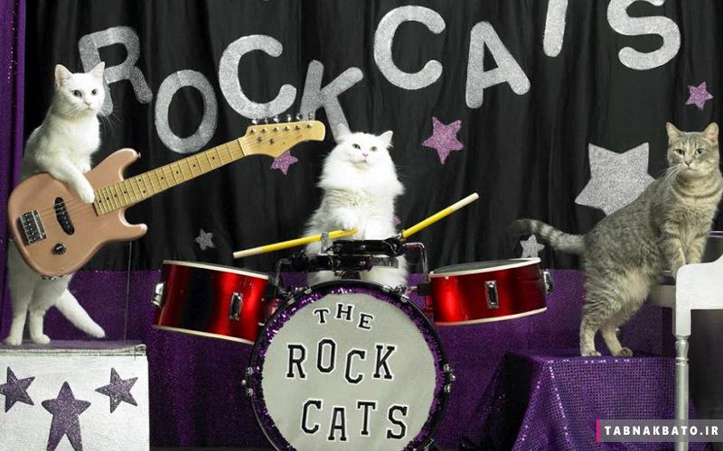 گربه های بازیگر در تئاترهای روسیه