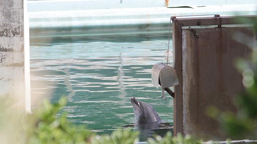 هانی؛ دلفینی که پس از تخلیه آکواریوم تنها رها شد